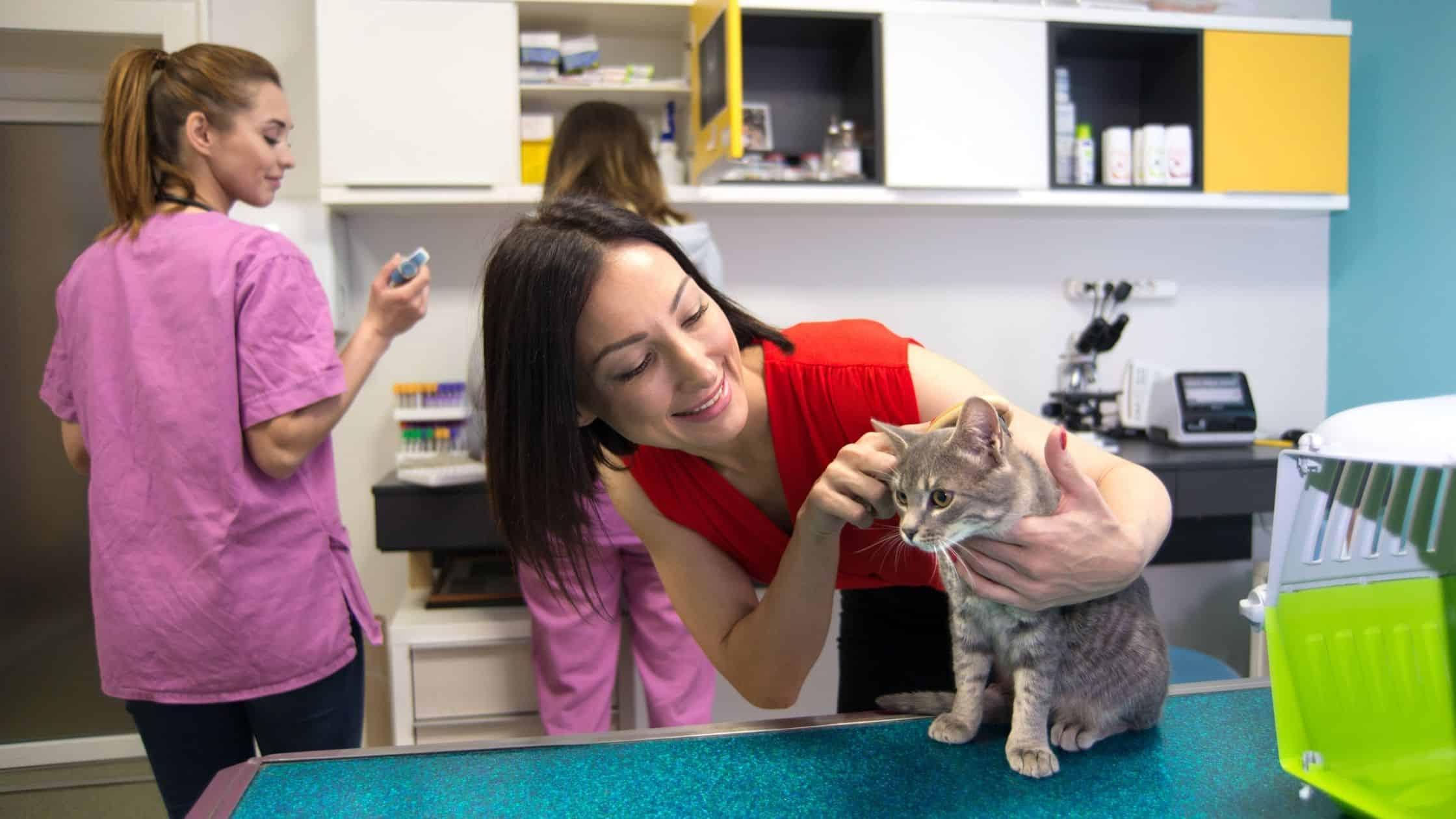 Owner checking on cat at vet office